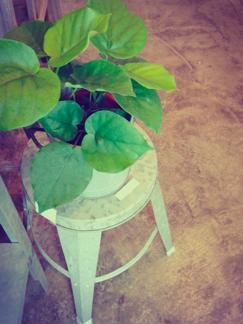 今週の鉢物さん_b0209477_13344051.jpg