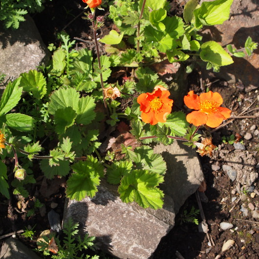 今日はお庭で_a0292194_2155578.jpg
