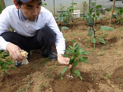 畑の草取り_a0154110_1622615.jpg