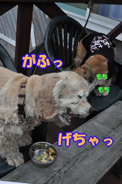 b0067012_0202437.jpg