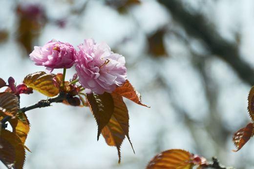 2013年5月31日(金):寒いとか言ってるうちに5月も終わり[中標津町郷土館]_e0062415_19355834.jpg