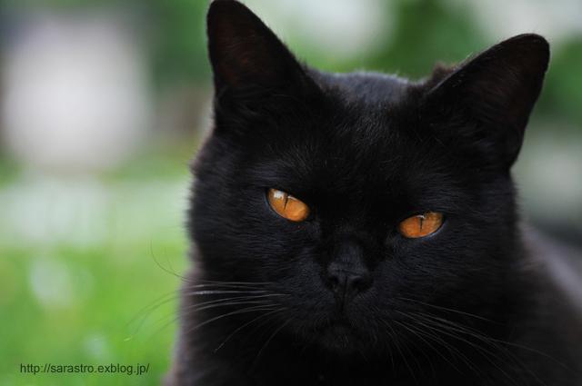 ノラ猫_e0028416_20505855.jpg