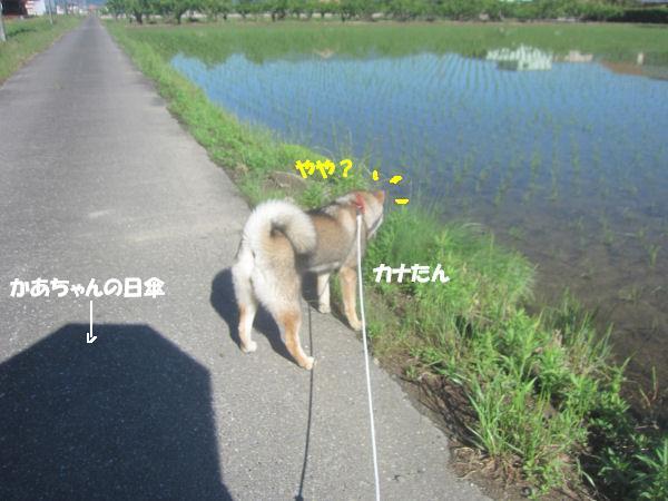 f0143123_9582663.jpg