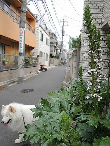 花散歩♪_c0062832_74275.jpg