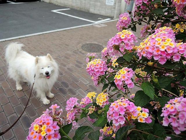 花散歩♪_c0062832_74724.jpg