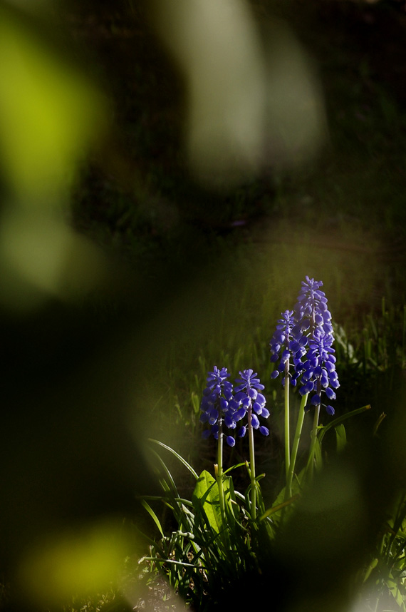 小さな紫の花_f0152939_2112967.jpg