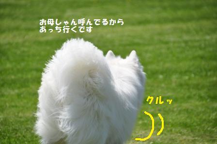 f0212597_11562012.jpg
