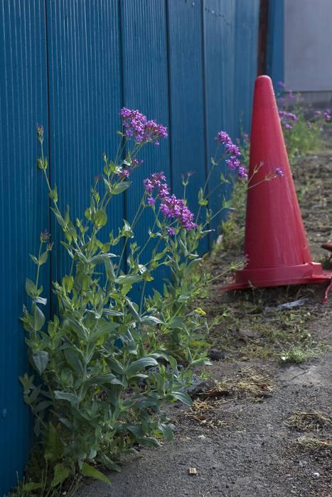 おかれた場所で咲きなさい_b0074098_13452365.jpg