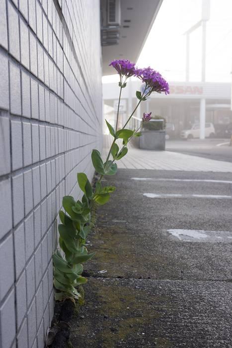 おかれた場所で咲きなさい_b0074098_1491055.jpg