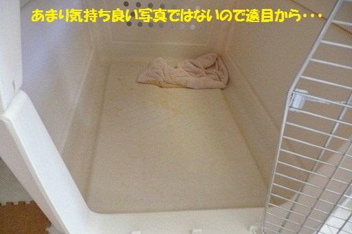 f0121712_529856.jpg