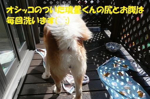 f0121712_605074.jpg