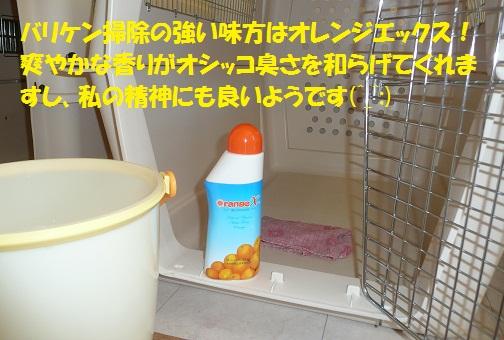 f0121712_61143.jpg