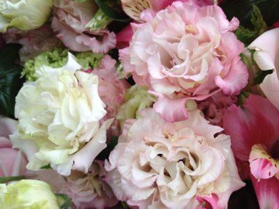 ピンク&グリーン_b0135325_2236023.jpg