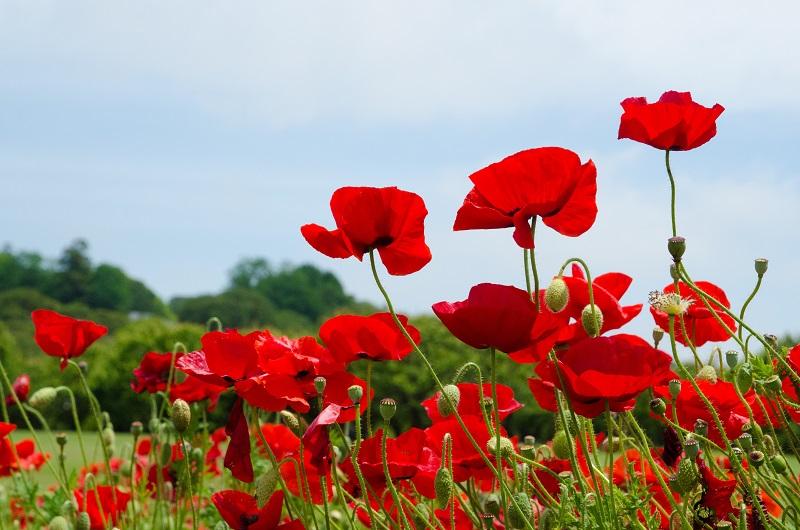 花は終わりかけていた_b0230131_16151477.jpg
