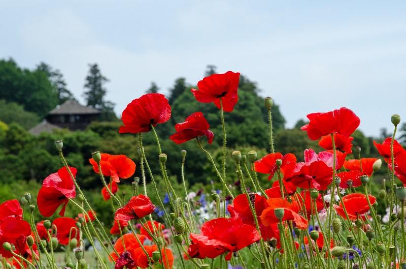花は終わりかけていた_b0230131_16205839.jpg
