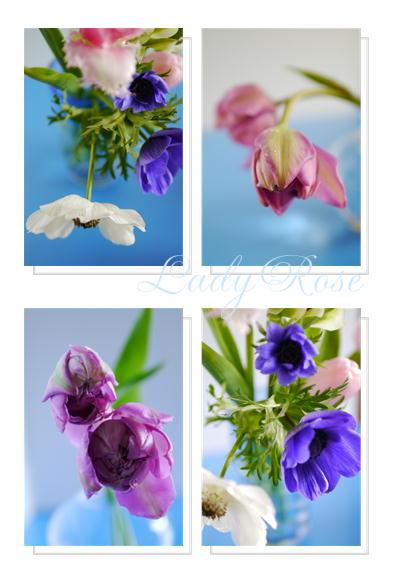 春の花達_f0292335_12263526.jpeg