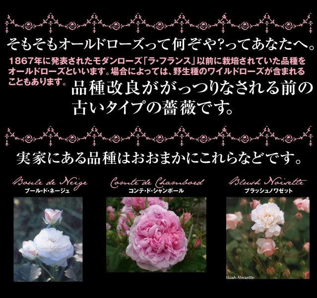 e0333645_17135367.jpg