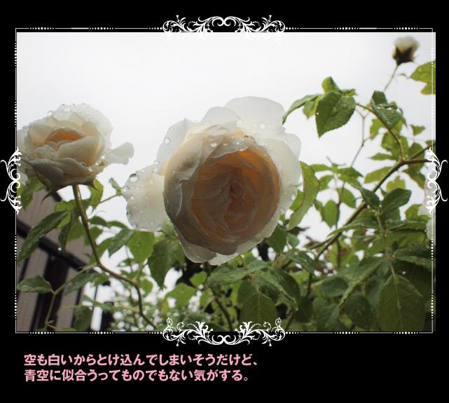 e0333645_17151385.jpg