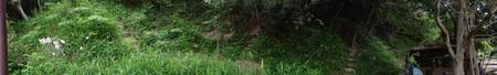 ササユリのピンク系大輪が今が見ごろ  in うみべの森_c0108460_2144338.jpg