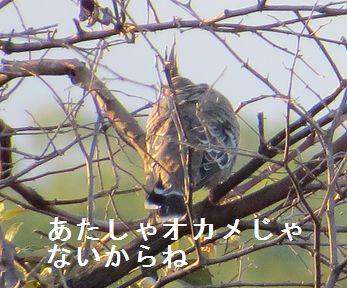 f0196665_1161857.jpg