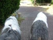 犬のコーナー♪コンティ&ロマネ_f0072767_19132048.jpg