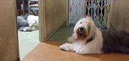 犬のコーナー♪コンティ&ロマネ_f0072767_19134328.jpg