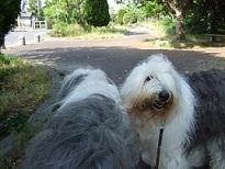 犬のコーナー♪コンティ&ロマネ_f0072767_1913972.jpg