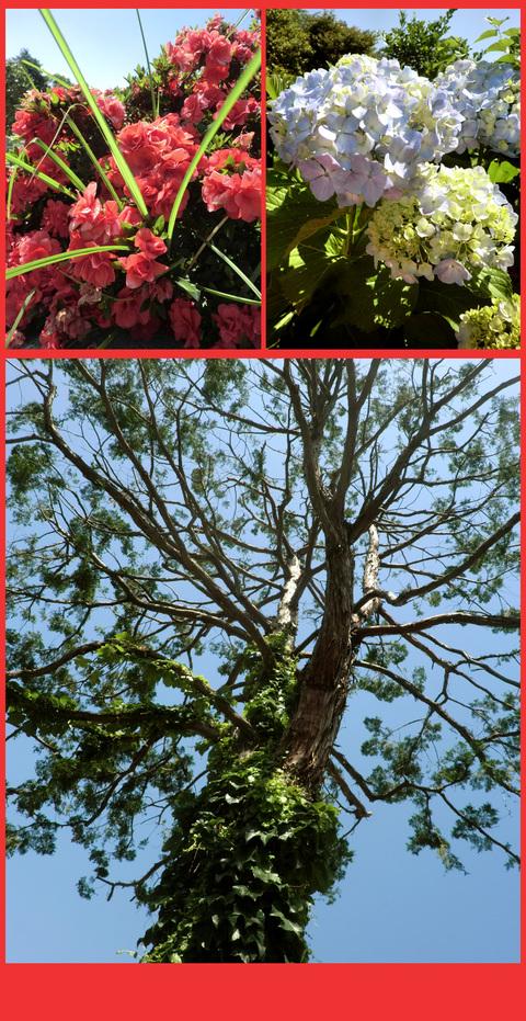 梅雨の中休み、青山は色鮮やかですよ!_e0236072_413385.jpg