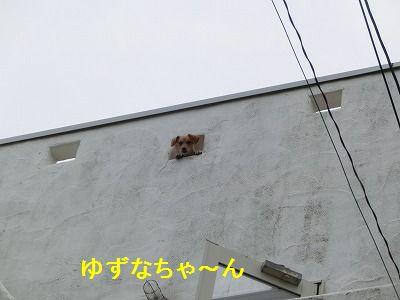 プレ誕生日の打ち上げ花火~_e0222588_16125415.jpg