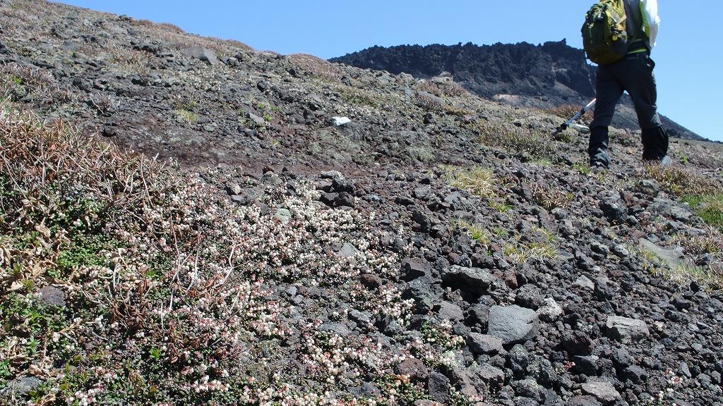 5月31日、風不死岳と樽前山-その2-_f0138096_23502836.jpg