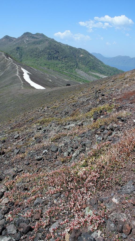5月31日、風不死岳と樽前山-その2-_f0138096_23504560.jpg