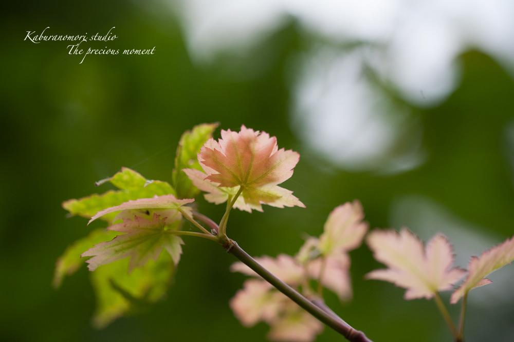 エゴの木が花盛り_c0137403_22122022.jpg