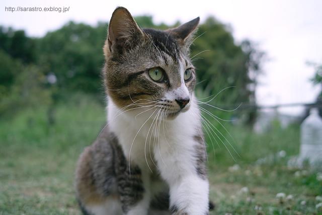 ノラ猫_e0028416_2147673.jpg