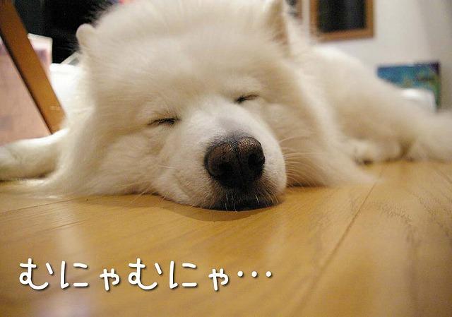 睡魔との闘い_c0062832_7145432.jpg