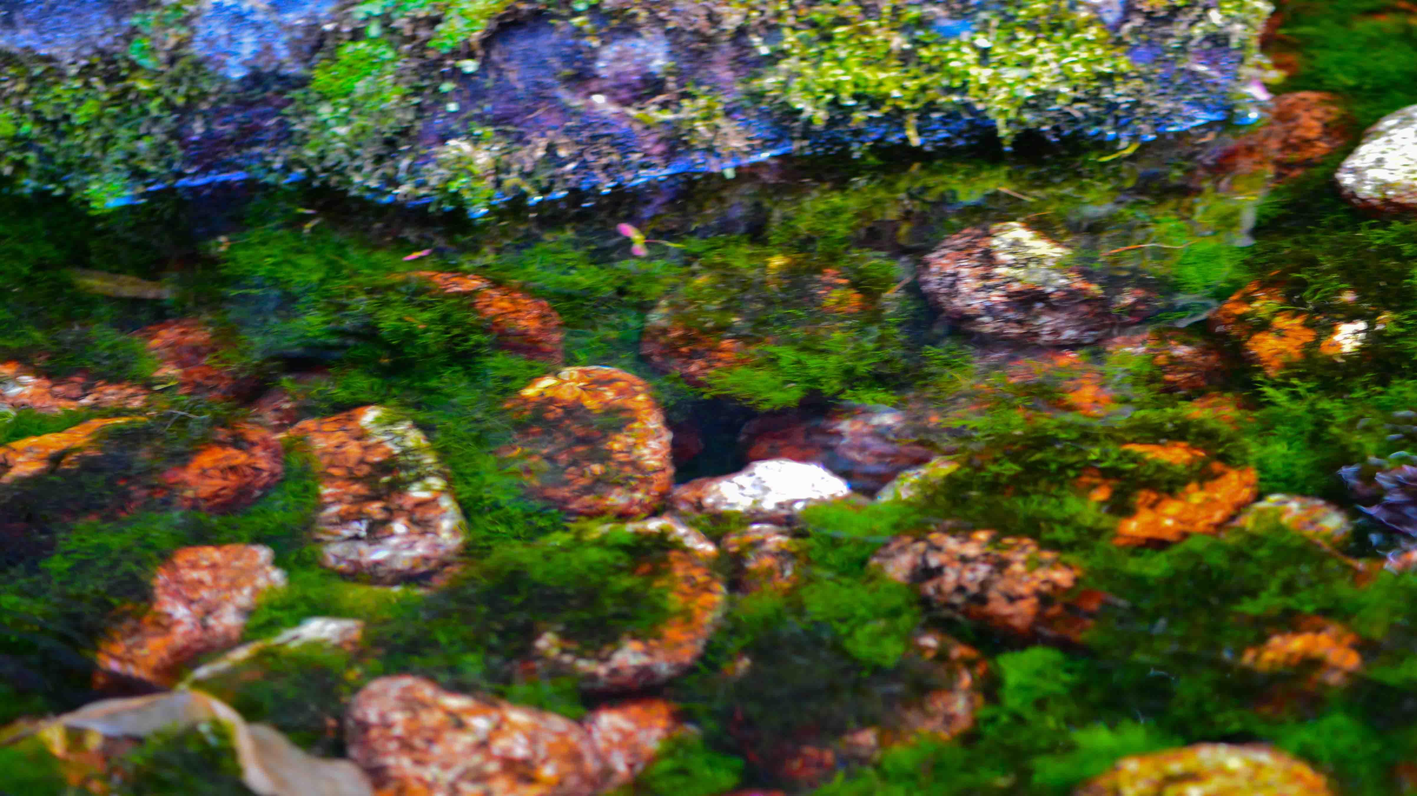 栗林公園 2013 0523_d0246136_17235435.jpg