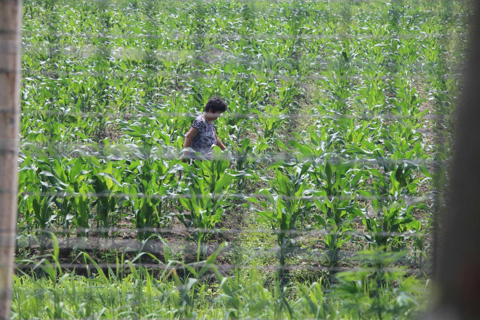 中朝陸の国境では兵士も農民も目と鼻の先(遼寧省丹東市)_b0235153_15572426.jpg