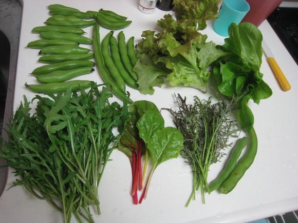 色々収穫が始まりました!_e0121558_21343576.jpg