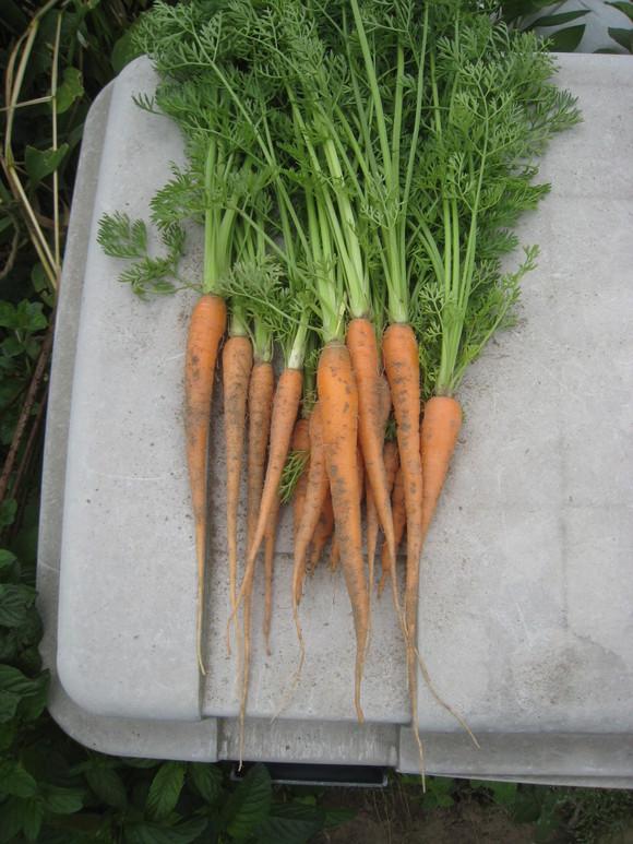 色々収穫が始まりました!_e0121558_21344560.jpg