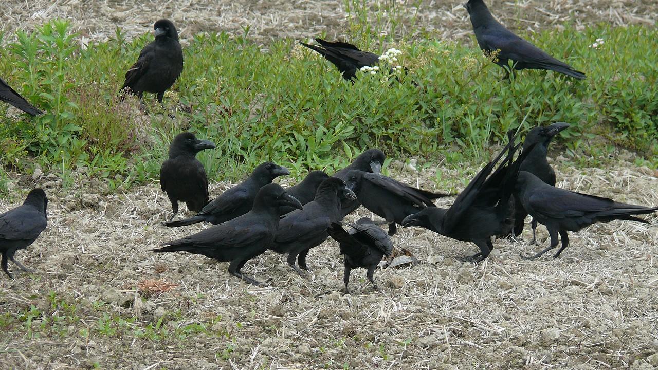 夜 カラス 鳴く スピリチュアル 【スピリチュアルメッセージ】鳥にはどんな意味があるの?夜の鳴き声...