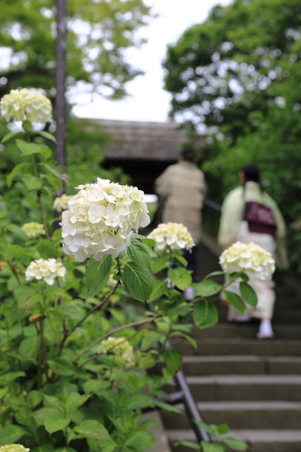 北鎌倉の紫陽花_b0275998_114520.jpg