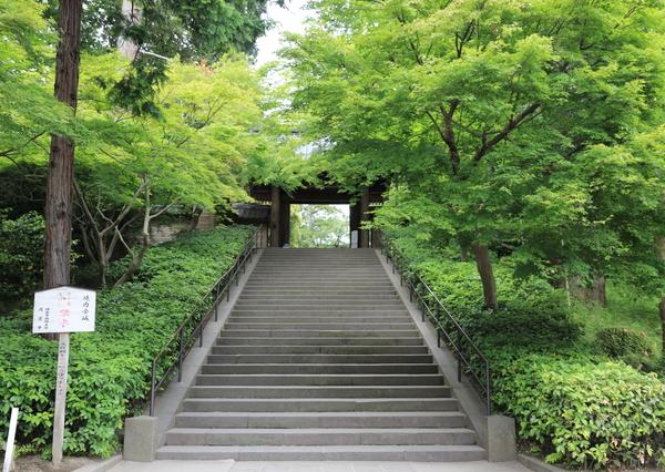 北鎌倉の紫陽花_b0275998_1194246.jpg