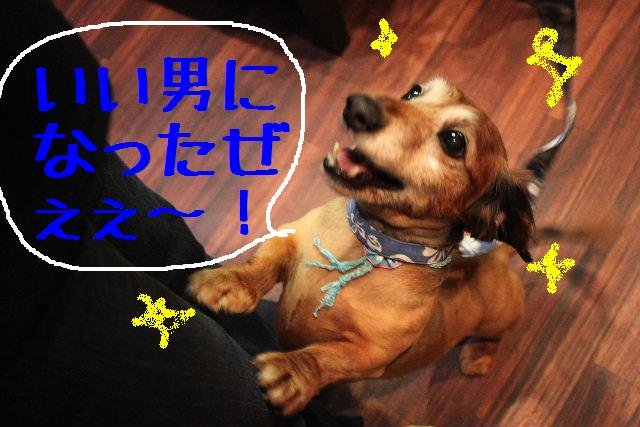 明日6月3日から6月14日まで、リニューアルの為お休みです!!_b0130018_227236.jpg