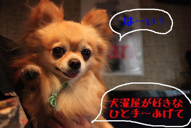 明日6月3日から6月14日まで、リニューアルの為お休みです!!_b0130018_229735.jpg