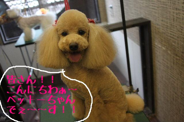 明日6月3日から6月14日まで、リニューアルの為お休みです!!_b0130018_2321973.jpg