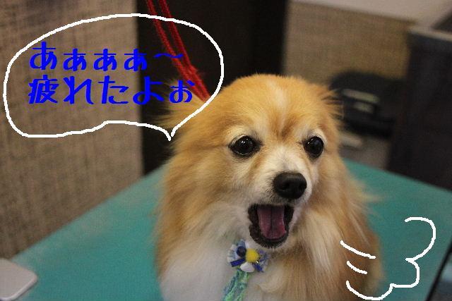 明日6月3日から6月14日まで、リニューアルの為お休みです!!_b0130018_233483.jpg