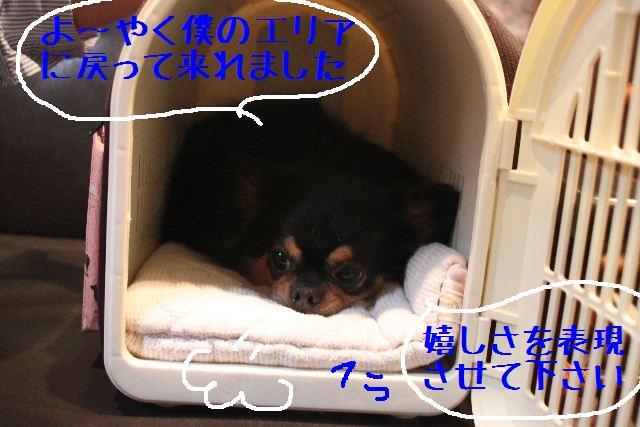 明日6月3日から6月14日まで、リニューアルの為お休みです!!_b0130018_2351163.jpg