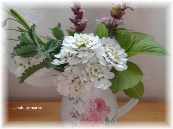 庭の花と・・_d0165645_1405960.jpg