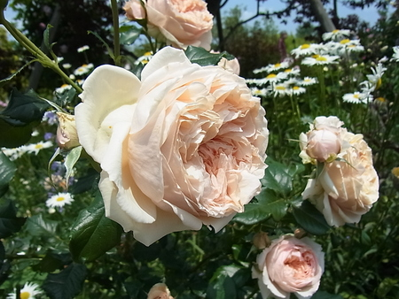 花菜ガーデン_a0223650_21454473.jpg