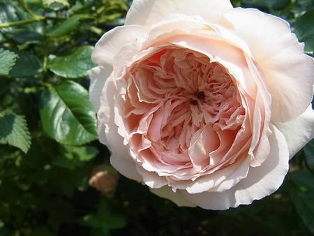 花菜ガーデン_a0223650_214667.jpg