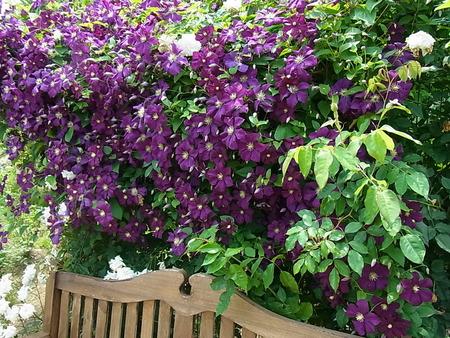 花菜ガーデン_a0223650_21494033.jpg